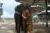 Слоняшки - обнимашки
