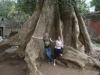 Вот это деревце!!!