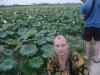 На плантации по выращиванию лотосов