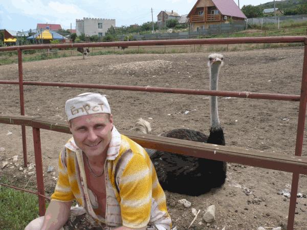 На страусовой ферме